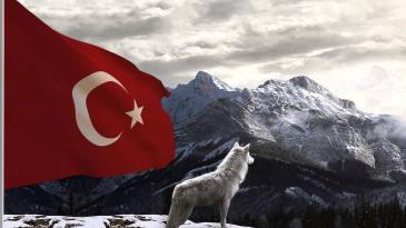 bozkurt türk ile ilgili görsel sonucu